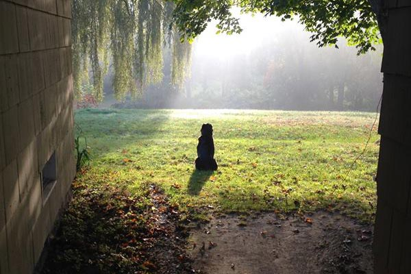 Photo of silhouette of Nate's dog