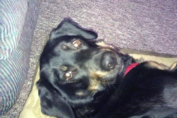 Photo of Nate's dog
